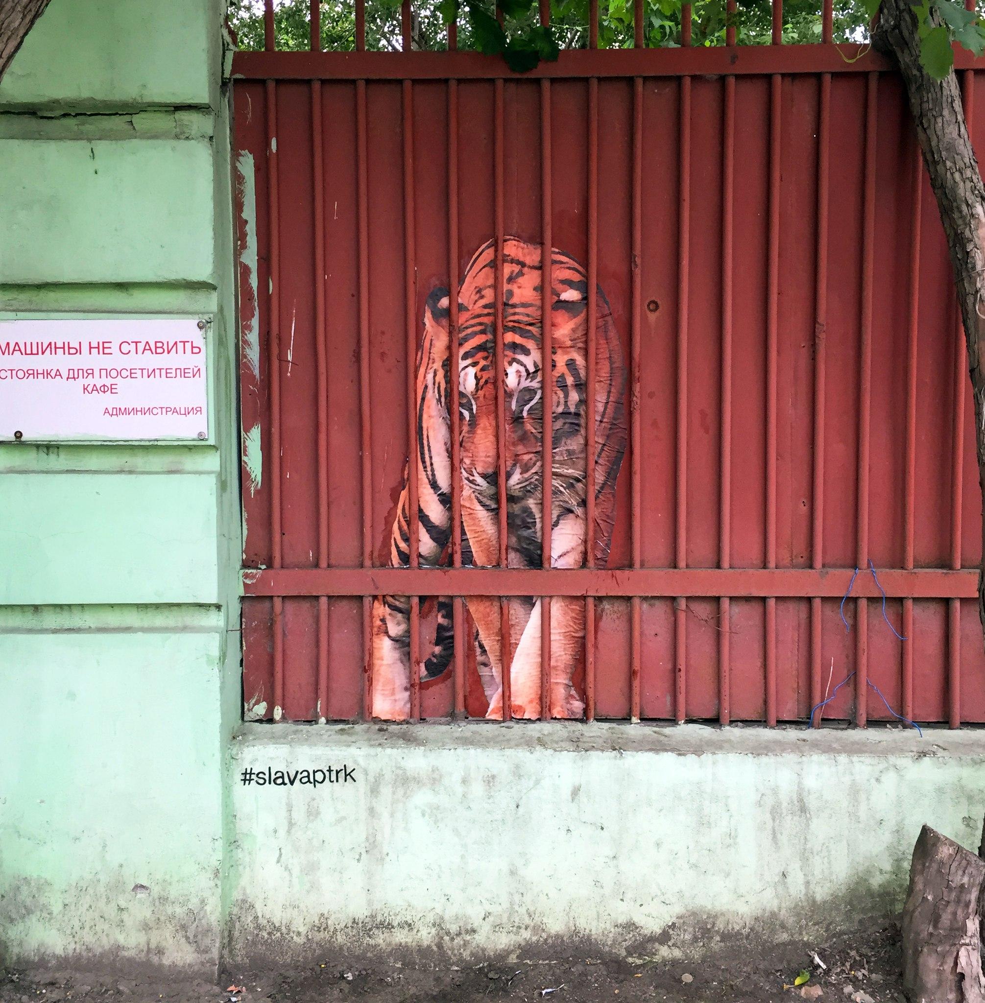 Тигр в клетке на Уктусе